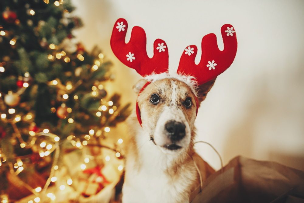 christmas decorations and pet
